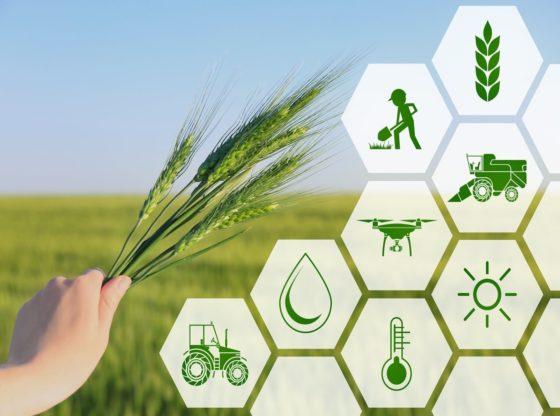 Best Agritech Startups in Vietnam